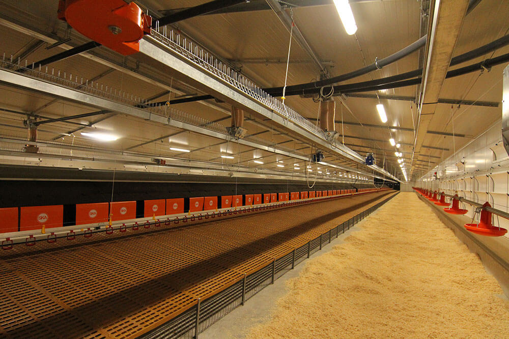 Chicken laying nests plan and sale - Poultry nesting systems-2