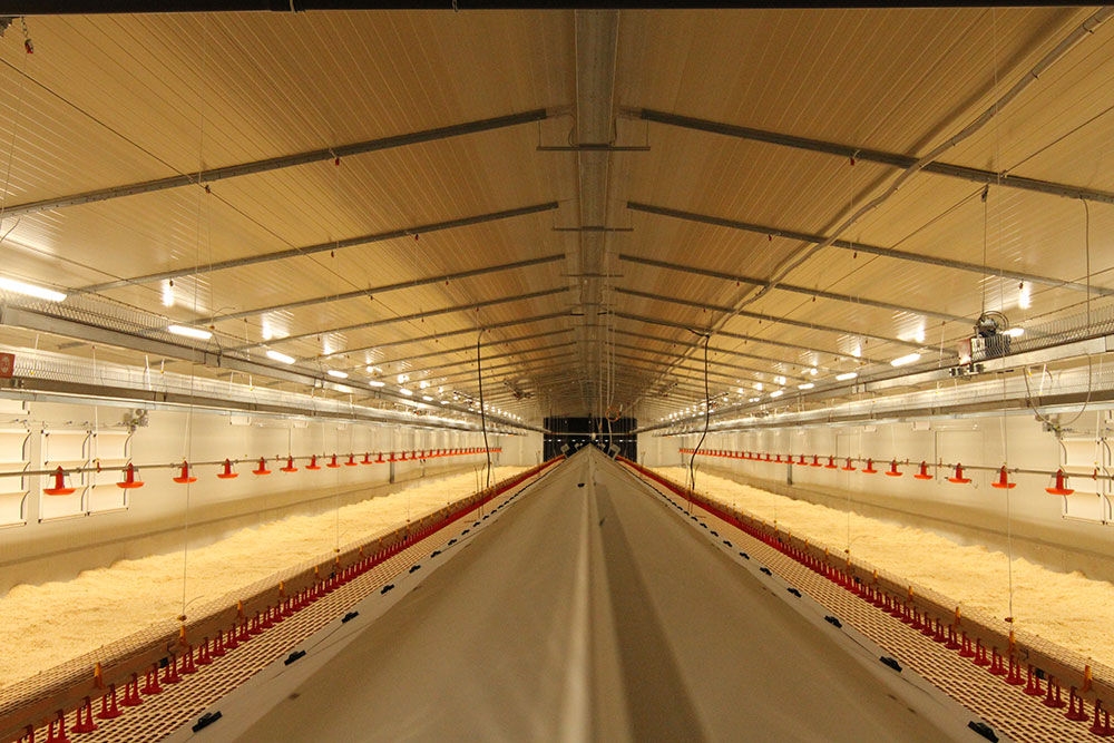 Chicken laying nests plan and sale - Poultry nesting systems-5