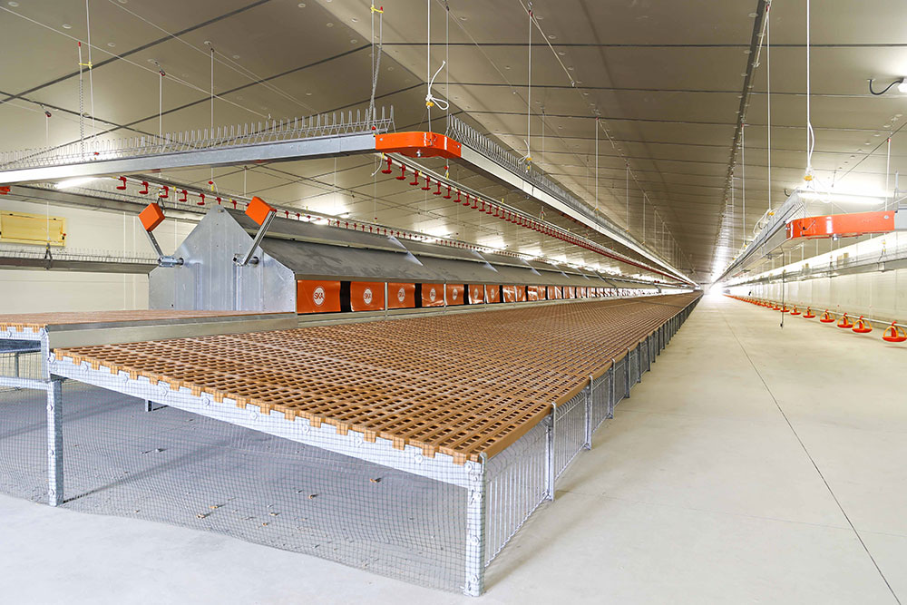 Chicken laying nests plan and sale - Poultry nesting systems