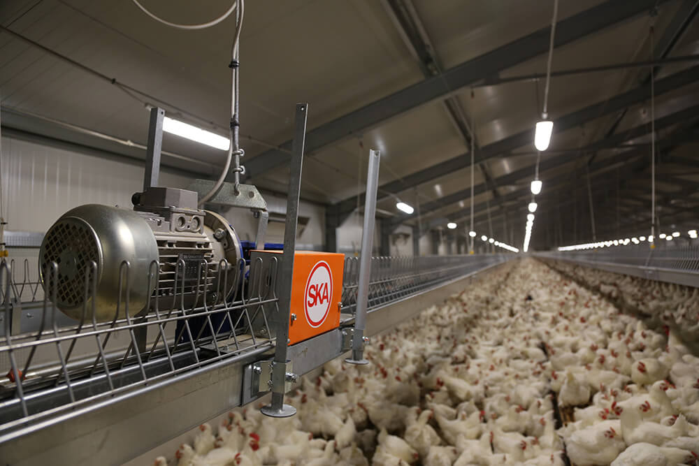 Layers feeding systems - Hen feeders - Automatic feeders for hens - Feeding systems for hens - 13