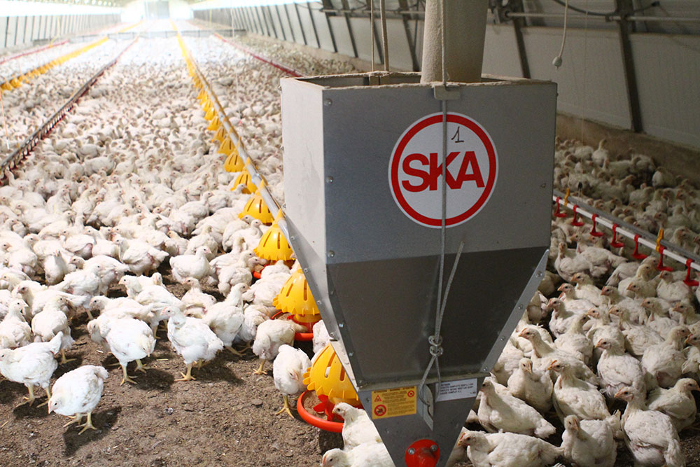 Layers feeding systems - Hen feeders - Automatic feeders for hens - Feeding systems for hens - 5