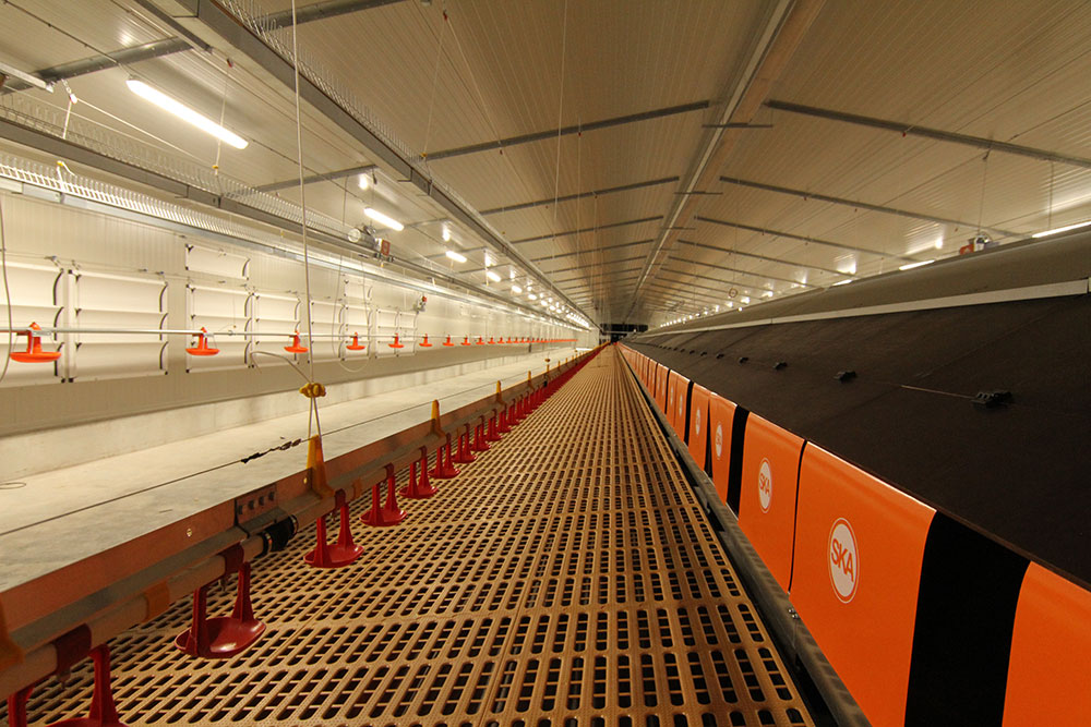 Poultry drinkers - commercial poultry farm watering systems - poultry drinking systems - poultry automatic drinkers-1