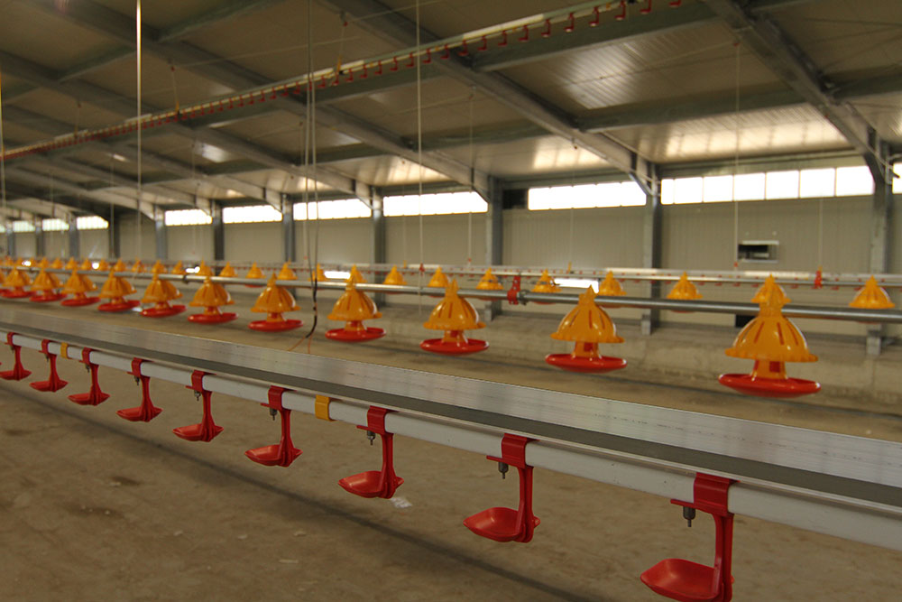 Poultry drinkers - commercial poultry farm watering systems - poultry drinking systems - poultry automatic drinkers-3