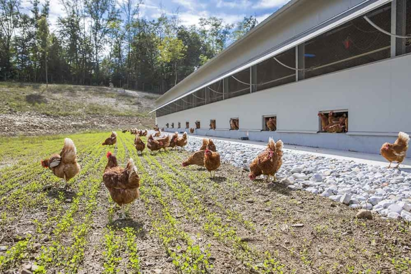 Poultry equipment manufacturer - Modern free range poultry systems -11