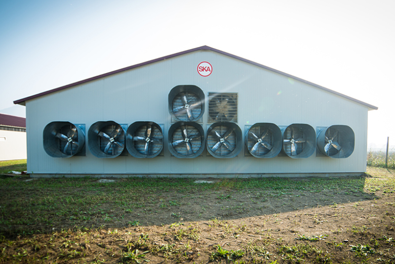 Poultry equipment manufacturer - Modern free range poultry systems -13