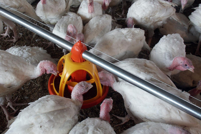 Poultry equipment manufacturer - Modern free range poultry systems -19