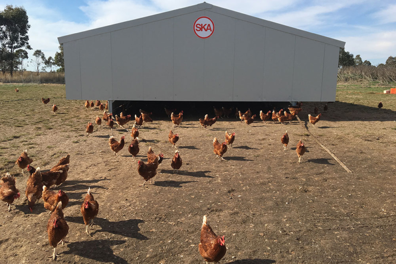 Poultry equipment manufacturer - Modern free range poultry systems -9