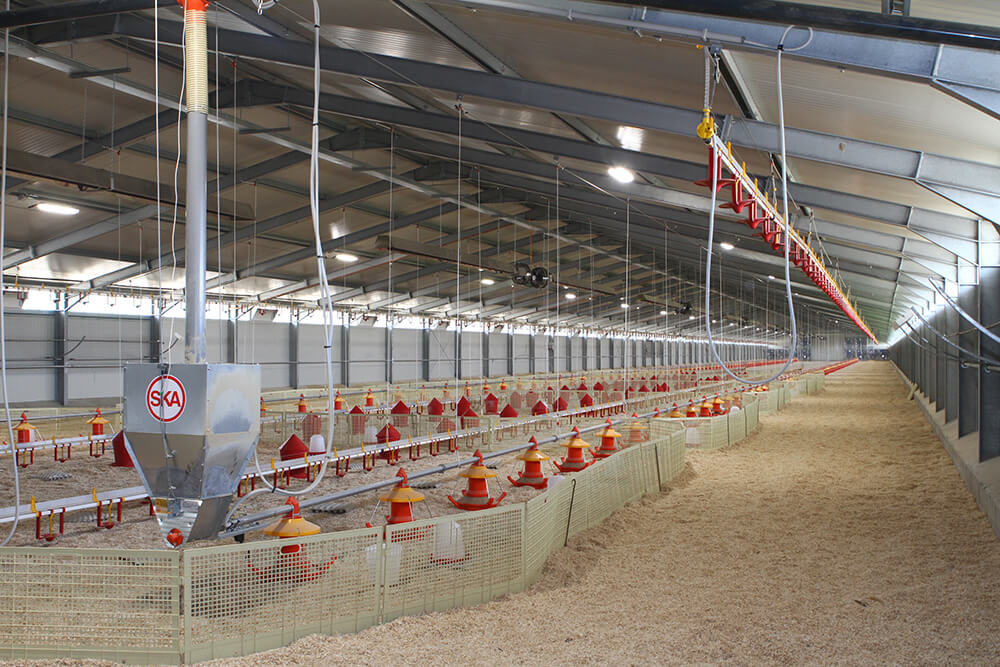 Poultry farm feeding equipment - Commercial poultry feeders - Automatic poultry feeding systems -12