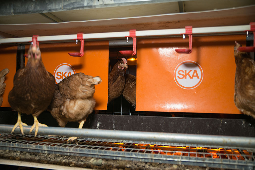 poultry aviaries - aviaries for laying hens - aviary system free range - aviary poultry systems-5